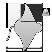 40 cm / 0,5 kg (ás)