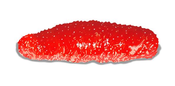 Pepino de mar o cohombro rojo
