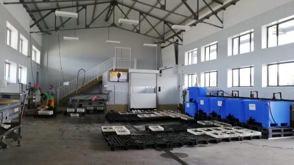 Novo axente certificado: Lonxa e depuradora da Confraría de Pescadores de Ferrol