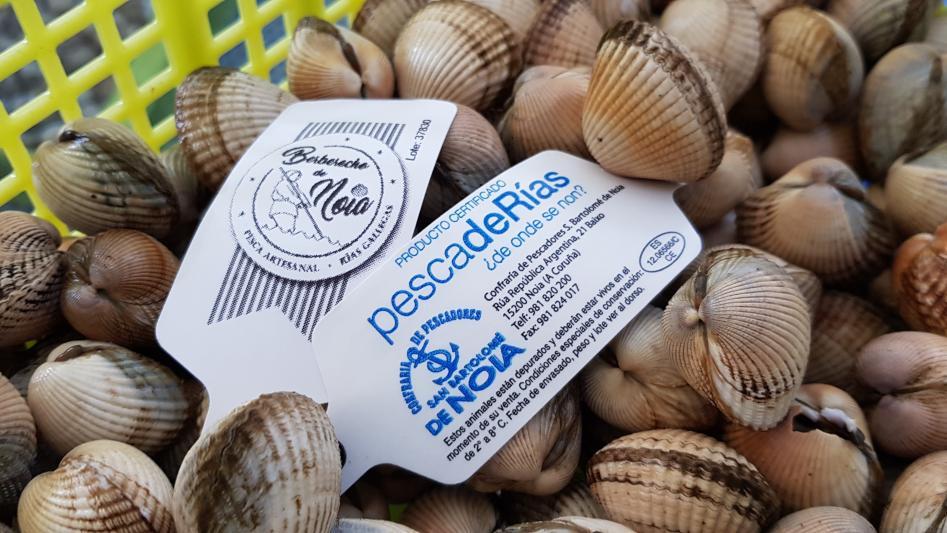 Hoxe remata a campaña marisqueira na Ría de Noia con cifras record