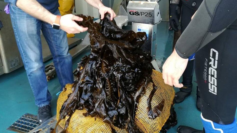 HQ Seaweed, novo axente certificado