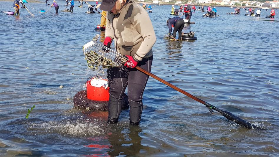 Inicio de la campaña marisquera en Noia