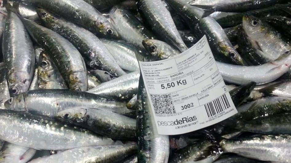 Publicada la resolución para la ordenación de la pesquería de la sardina