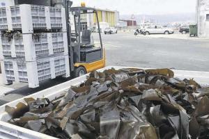 Algas certificadas pescadeRías