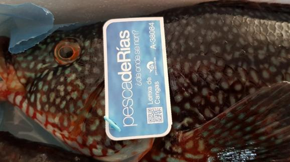 pescadeRías & pescaenverde