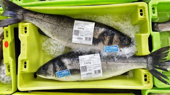 O selo pescadeRías incrementa o valor dos produtos da Lonxa de Ribeira